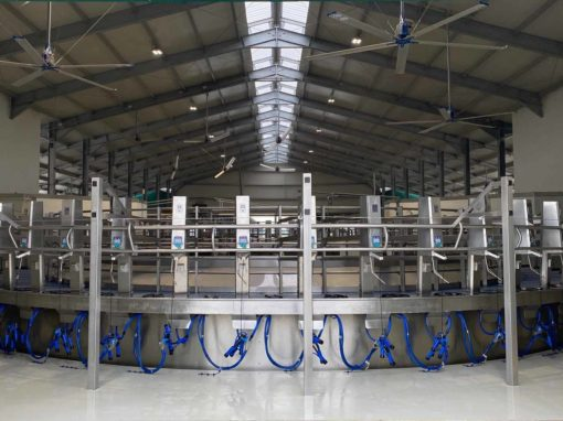 Rotary milking parlour with external milking